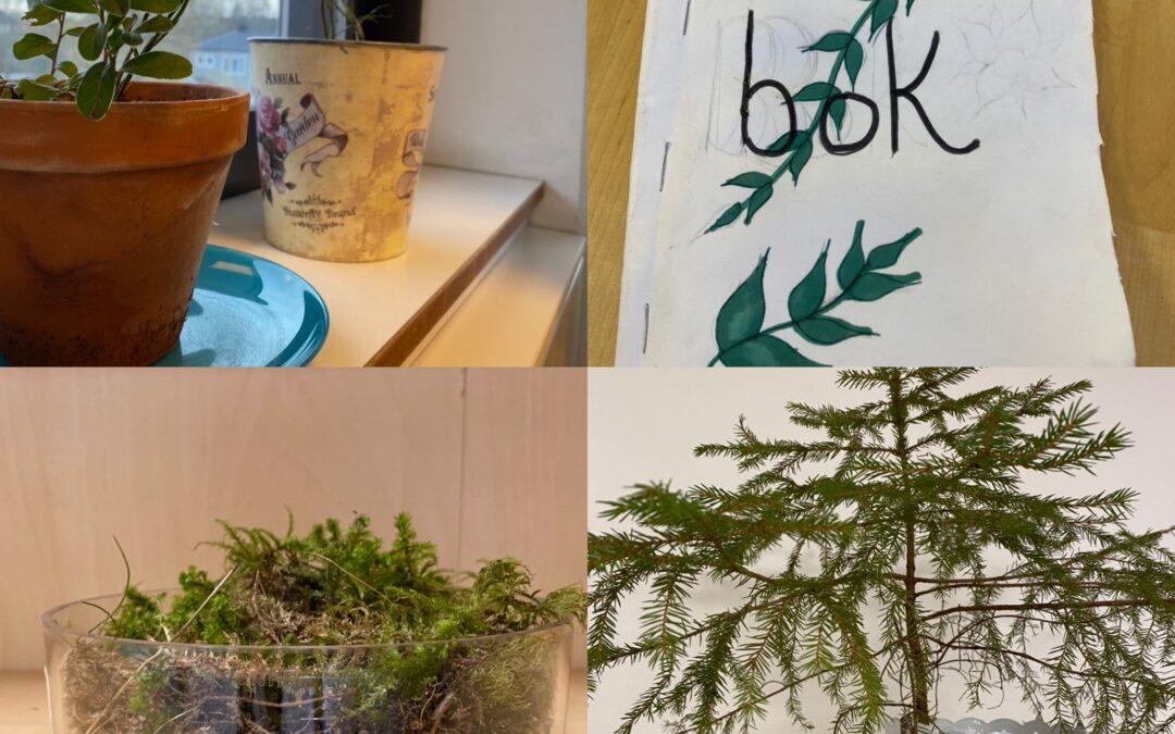 Ekosystem i fokus på Eviaskolan